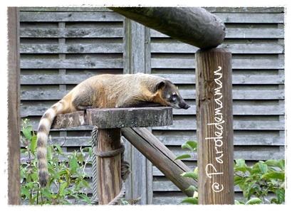 http://quotidiendemaman.cowblog.fr/images/pandaroux.jpg