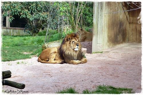 http://quotidiendemaman.cowblog.fr/images/photos2/P1120043.jpg